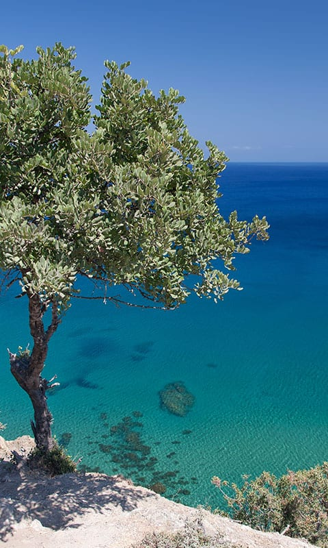 Tree in front of blue ocean in Cyrpus