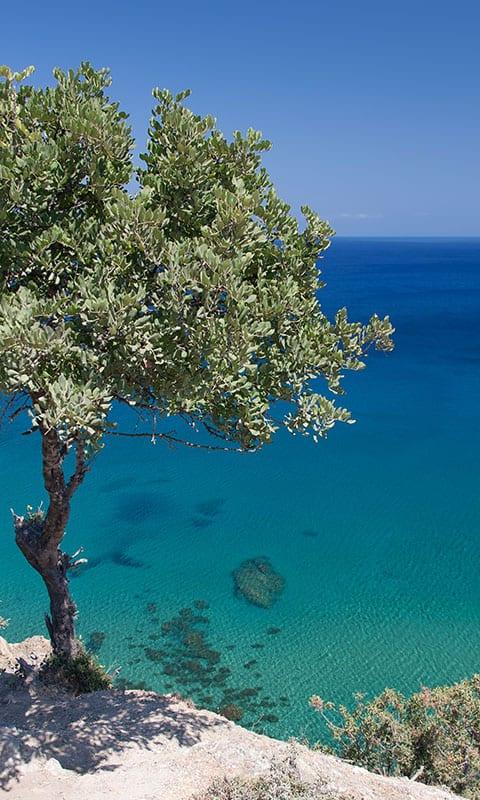 Tree in front of blue ocean in Cyrpus