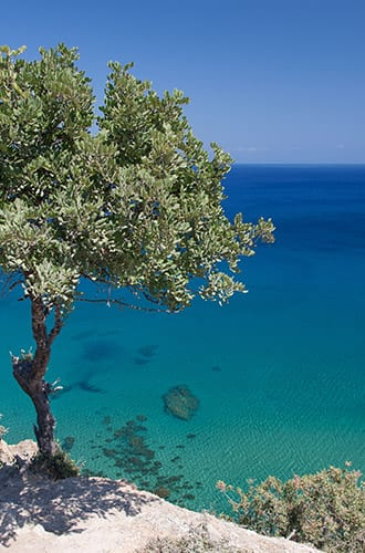 A tree in front of a blue ocean in Cyprus