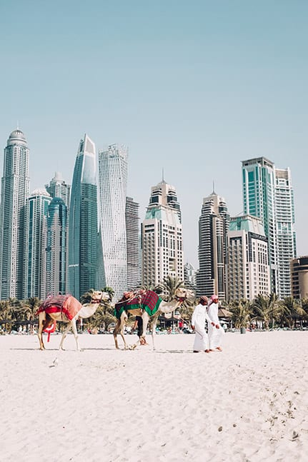 Camel rides on a beach in Dubai