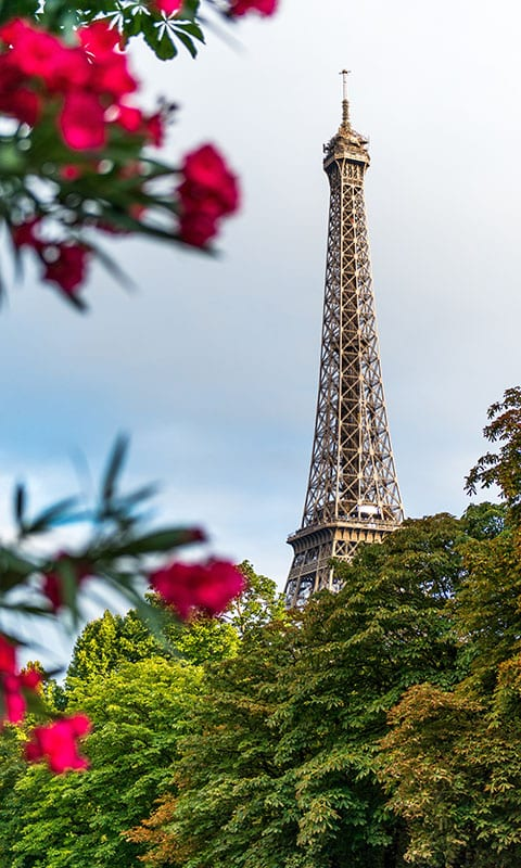 Eiffel Tower with trees in Paris, France