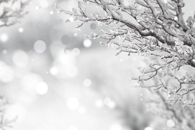 Snow fall with snow covered branches for a white wedding